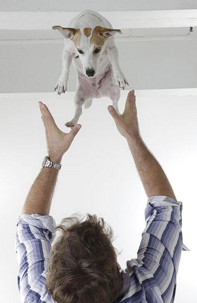 Man Gentleman Canine Happy Content Dog Toss Lob Pe