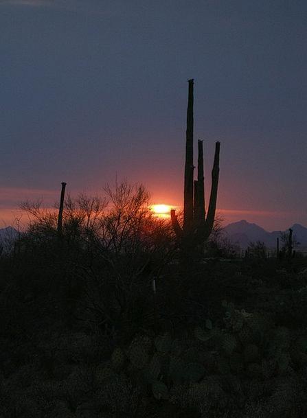 Cactus Vacation Sundown Travel Desert Reward Sunse