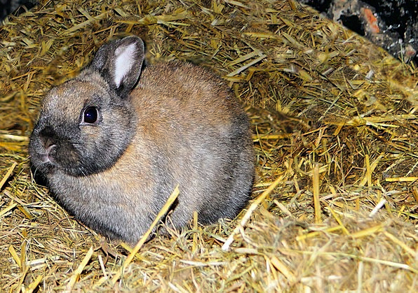 Hare Stand Straw Grass Stall Beautiful Hay Furry P