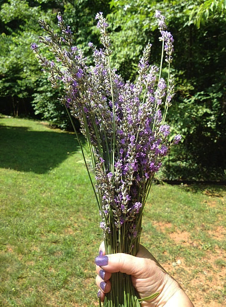 Lavender Violet Herbs Basils English Summer Straw-