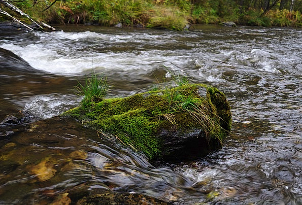 Water Aquatic Landscapes Stream Nature Flowing Gra