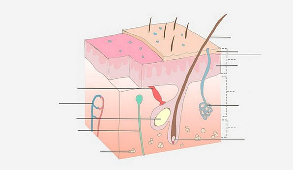 Anatomy Structure Medical Casing Health Body Form