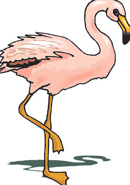 Bird Fowl Shadow Gumshoe Flamingo Pink Flushed Fau