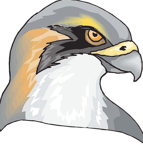 Hawk Warmonger Fowl Head Skull Bird Feathers Face