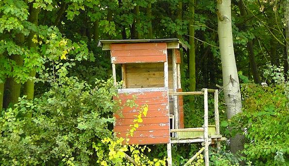 Delight Enjoyment Landscapes Nature Wood Timber Hu