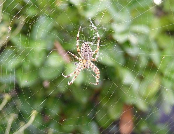 Spider Mesh Autumn Fall Web Spiderweb