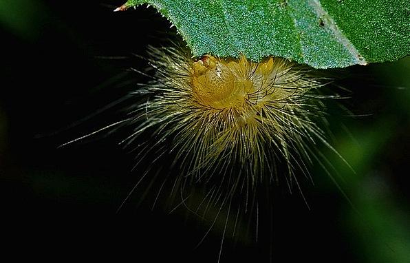 Caterpillar Worm Instruction Entomology Macro Biol