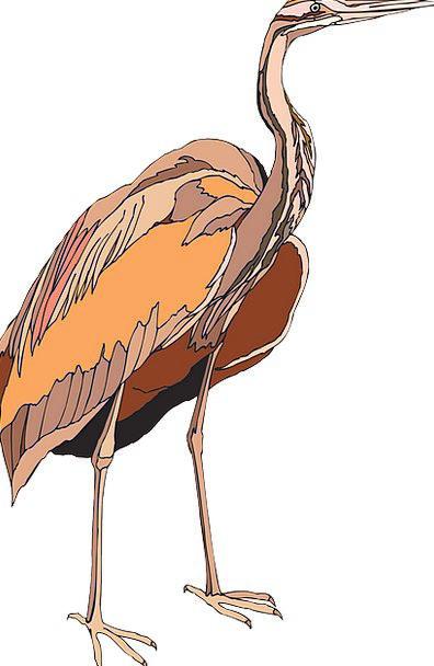 Heron Elaborate Bird Fowl Purple Wings Annexes Fre