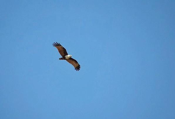 Eagle Vacation Hovering Travel Benaulim Flying Goa