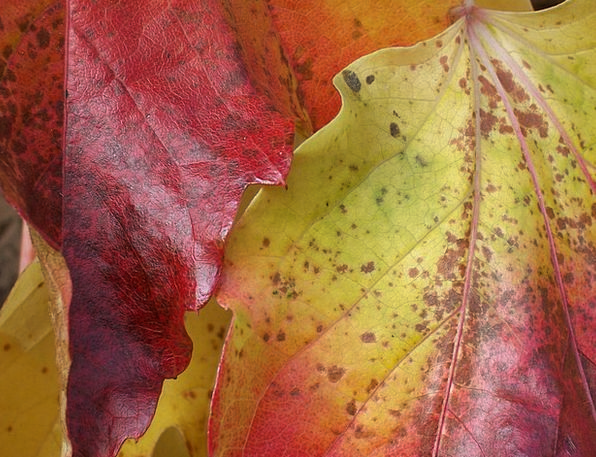 Golden October Greeneries Autumn Fall Leaves Color