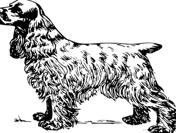 Dog Canine Domesticated Fur Hair Pet Breed Type Sp