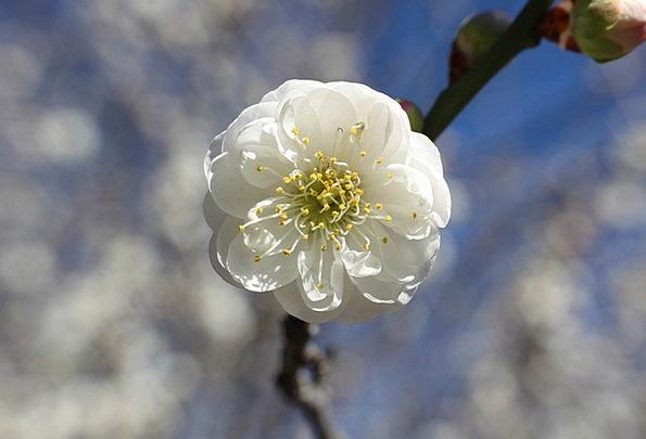 Flower Floret Landscapes Nature Blossom Bloom Gard