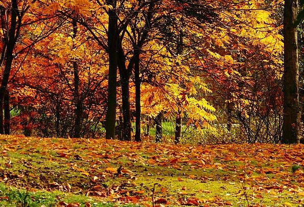 Views Opinions Fall Late Autumn Autumn Maple