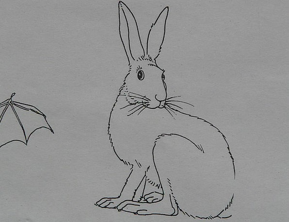 Hare Physical Coloring Pages Animal Paint Dye Draw