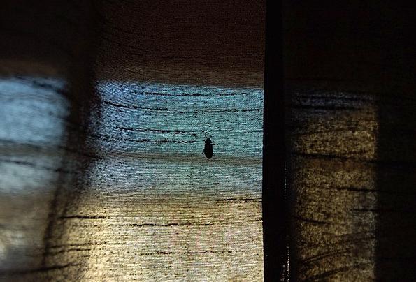 Shabby Scruffy Drape Beetle Curtain Climbing Uphil