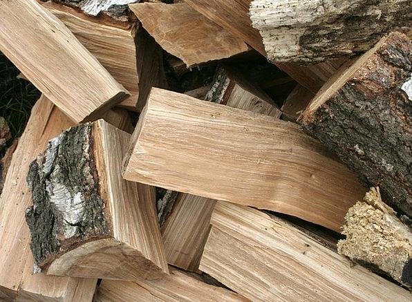 Tree Sapling Landscapes Petroleum Nature Wood Timb