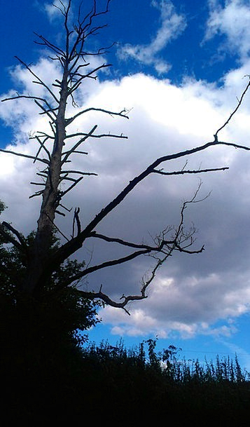 Sky Blue Dead Wood Dead Tree