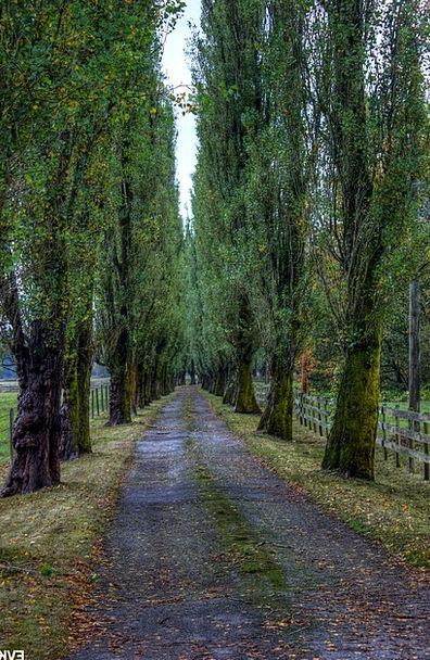 Trees Plants Traffic Street Transportation Entrywa