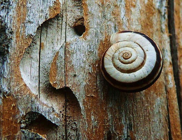 Snail Landscapes Countryside Nature Wildlife Natur