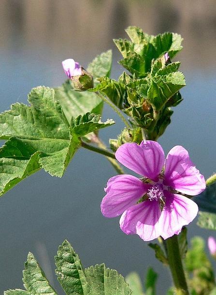 Flower Floret Flowery Pink Flushed Floral Elegance