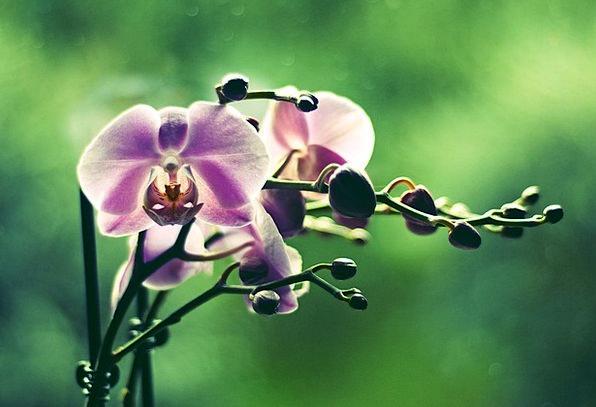 Orchid Landscapes Floret Nature Colored Tinted Flo