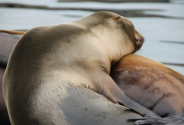 Seals Closures North Sea Norwegian Sea Crawl Skulk