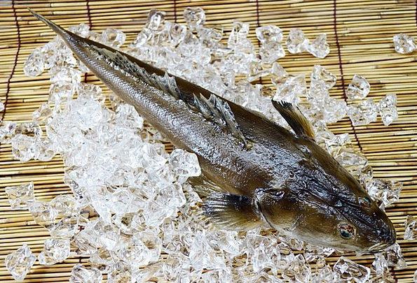 Fish Angle Drink Food Seafood Sea Exotic Food Nour