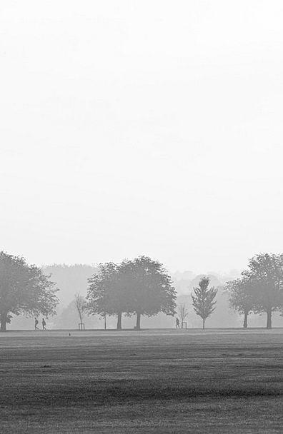 Fog Landscapes Unclear Nature Landscape Scenery Fo