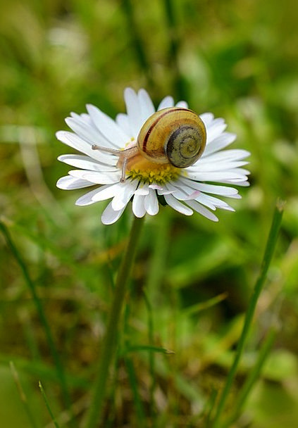 Snail Landscapes Field Nature Daisy Meadow Nature
