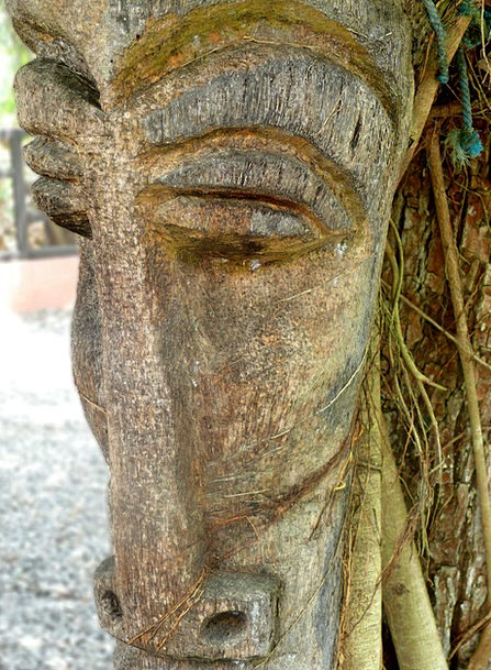 Face Expression Timber Tree Sapling Wood Dominican