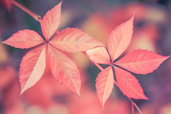 Autumn Fall Greeneries Fall Foliage Leaves Colorfu