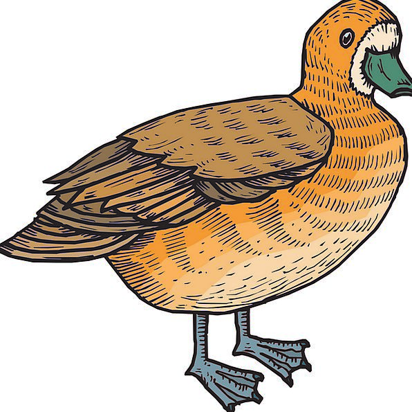 Brown Chocolate Carroty Bird Fowl Orange Duck Stoo
