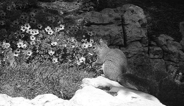 Squirrel Collector Common Stone Pebble Park Rock P