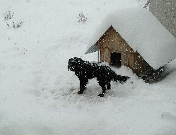 Winter Season Snowflake Patagonia Snow Dog Canine