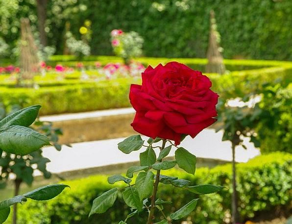Pink Flushed Grenade Garden Of Alhambra