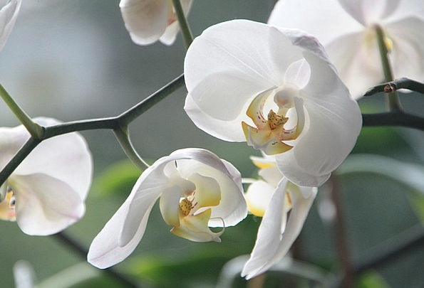 Orchid Landscapes Floret Nature White Snowy Flower