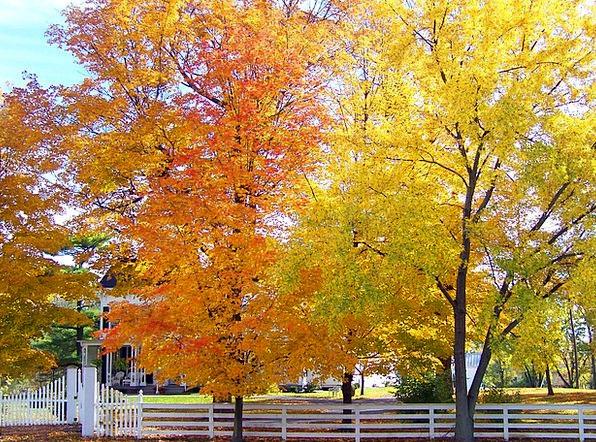 Trees Plants Fall Reduction Autumn Maple Season Pe