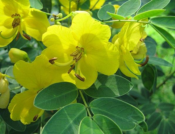 Lemon Yellow Landscapes Flourishing Nature Yellow