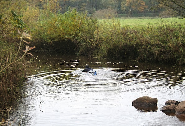 Swimmer Bather Aquatic River Stream Water
