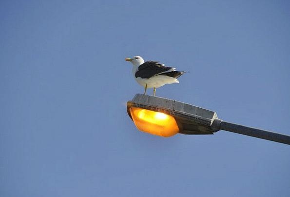 Gull Traffic Transportation Perched Balanced Seagu
