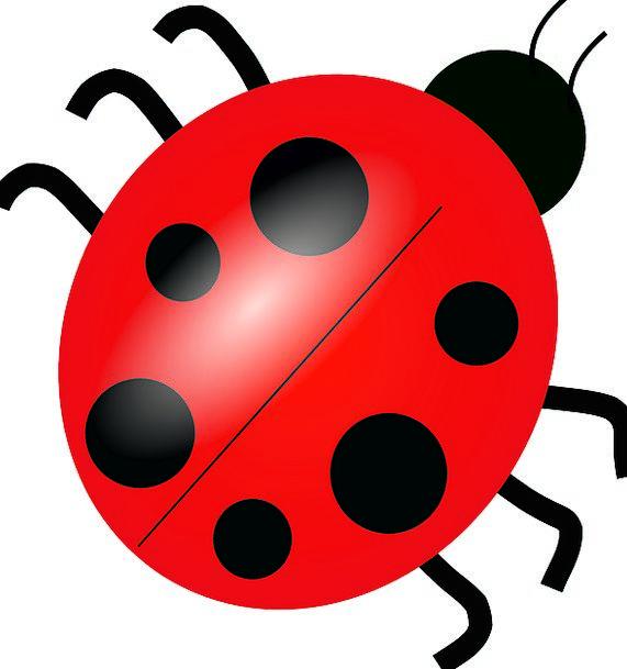 Ladybug Bug Germ Ladybird Colorful Red Bloodshot F