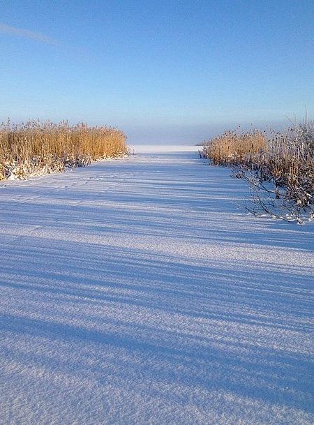 Winter Season Frost Reed Cane Ice Hjälstaviken Whi