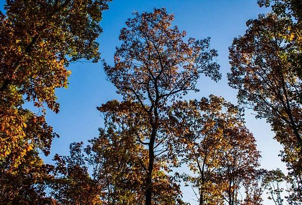 Autumn Fall Landscapes Plants Nature Sky Trees Oak