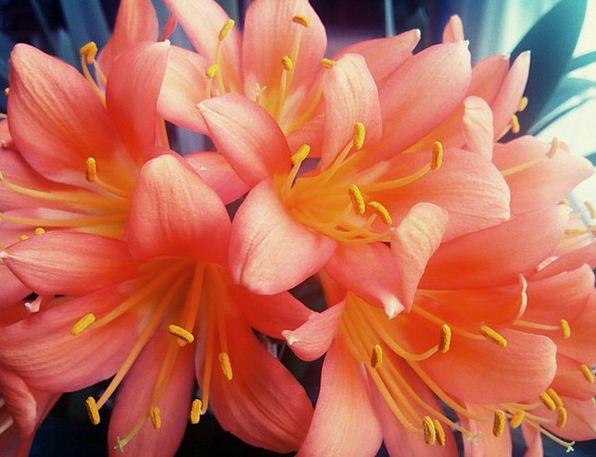 Flower Floret Landscapes Nature Yellow Creamy Rosa