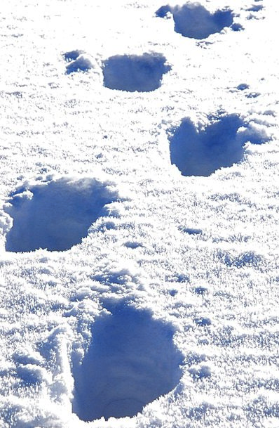 Snow Snowflake Suggestions Trudge Slog Traces