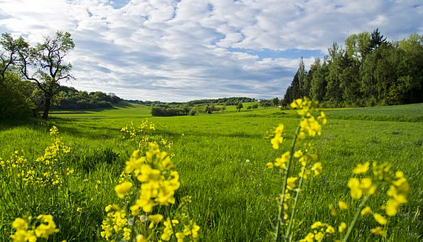 Meadow Field Landscapes Plants Nature Spring Meado