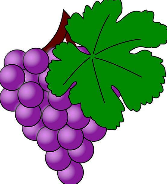 Grapes Drink Ovary Food Purple Elaborate Fruit Vin