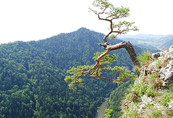 Mountain Crag Landscapes Crags Nature Tree Sapling