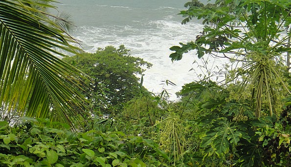 Greenery Foliage Landscapes Vegetation Nature Natu