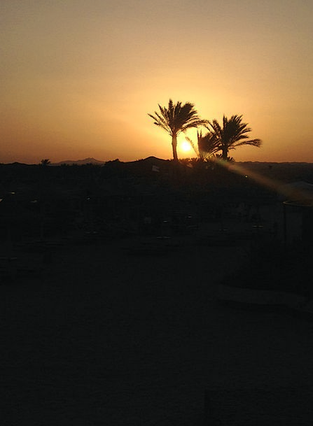 Sunset Sundown Vacation Tributes Travel Egypt Palm
